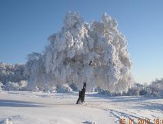 Pom... de iarna