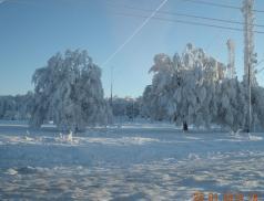 Copaci si antene