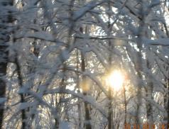 Soare cazut in padure